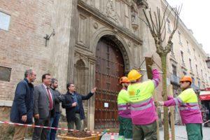 Nuevos árboles para los alcorques vacíos del eje Campana-Laraña