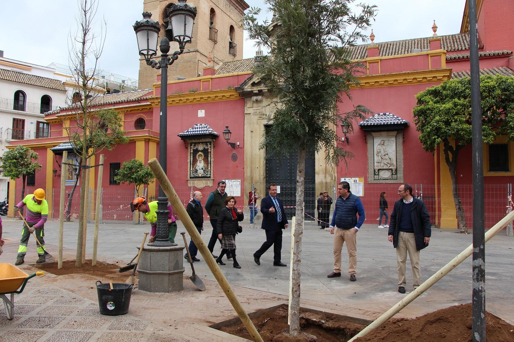 Comienza la plantación de 12 almeces  y 6 grevilleas en la Plaza de San Lorenzo que sustituyen a los 12 plátanos