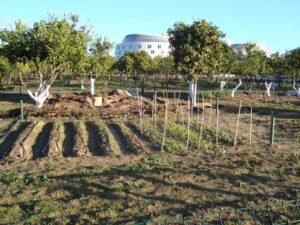 Abierta la convocatoria para adjudicar los huertos en el Parque del Alamillo