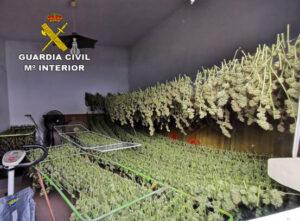 La Subdelegación del Gobierno constituye una mesa de trabajo contra el cultivo de droga indoor en Sevilla
