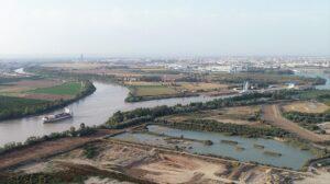 El CSIC y la Autoridad Portuaria de Sevilla censan 52 especies de aves acuáticas