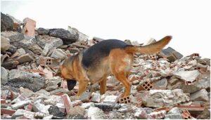 Bomberos de la unidad canina de Sevilla viajan a Beirut para labores de búsqueda y rescate