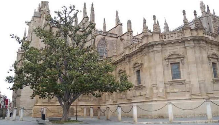 """""""Mimos"""" para el magnolio de la Catedral"""