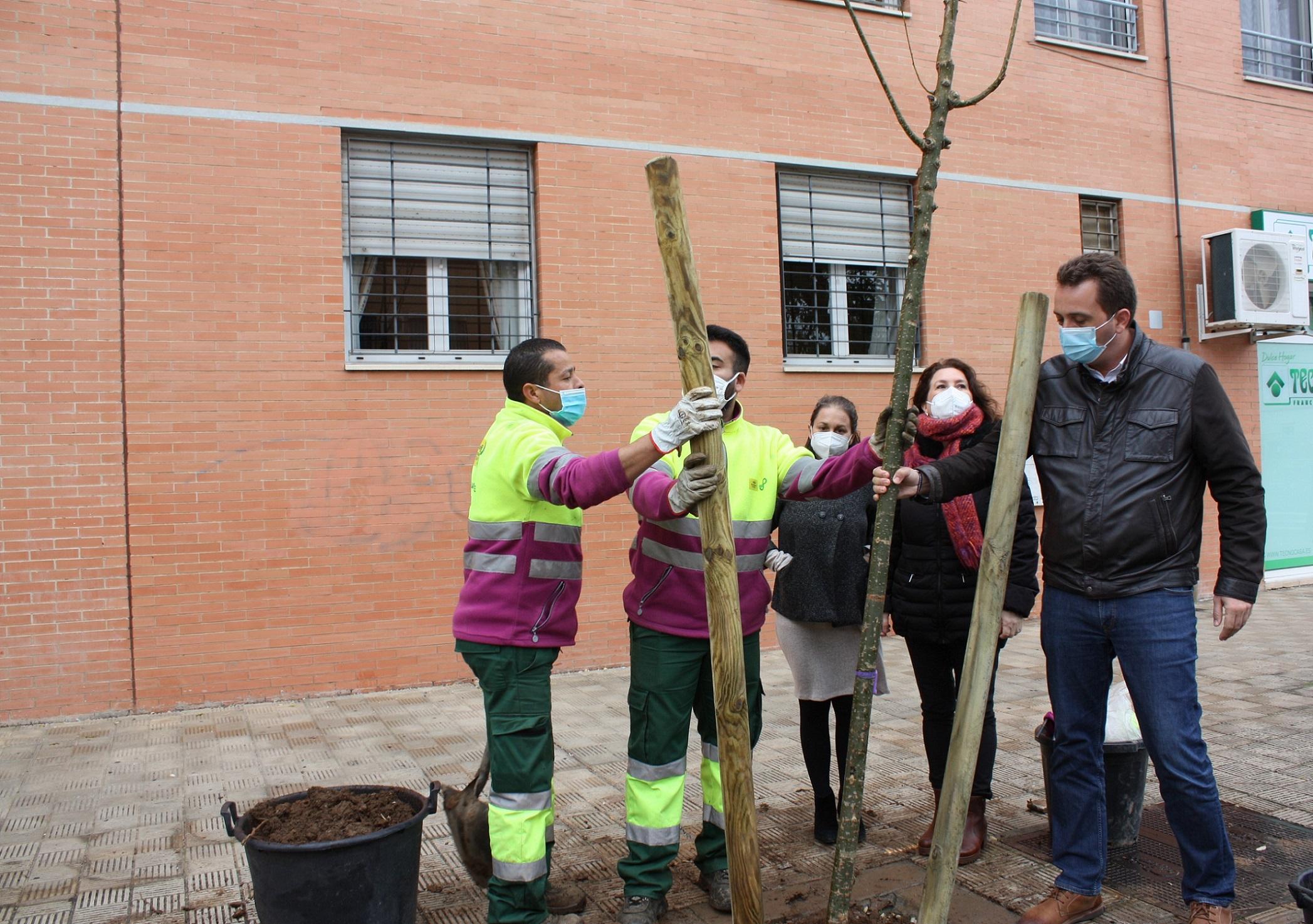53 nuevos árboles en alcorques vacíos en Pino Montano