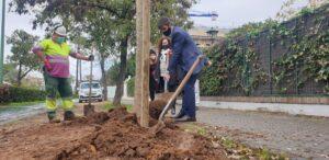 1.000 nuevos árboles en alcorques antes vacíos desde que comenzara la campaña de hace dos meses