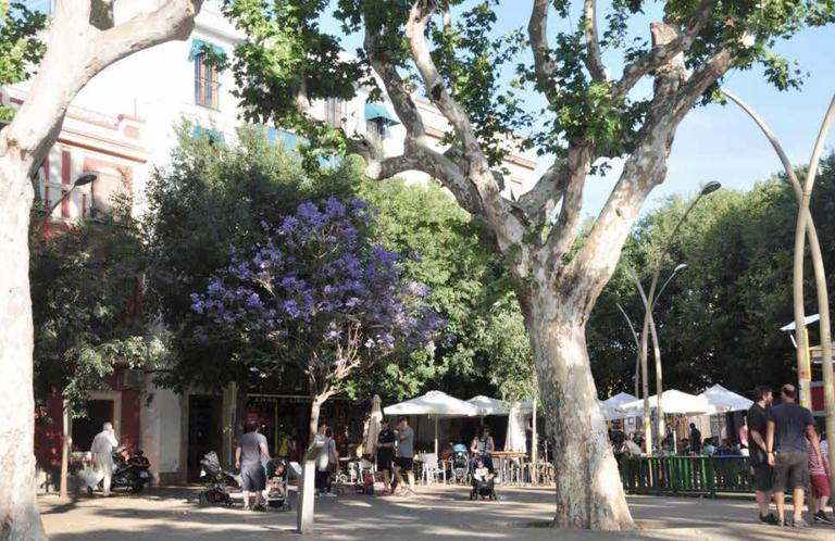 Parques y Jardines elaborará un catálogo de árboles singulares de la ciudad