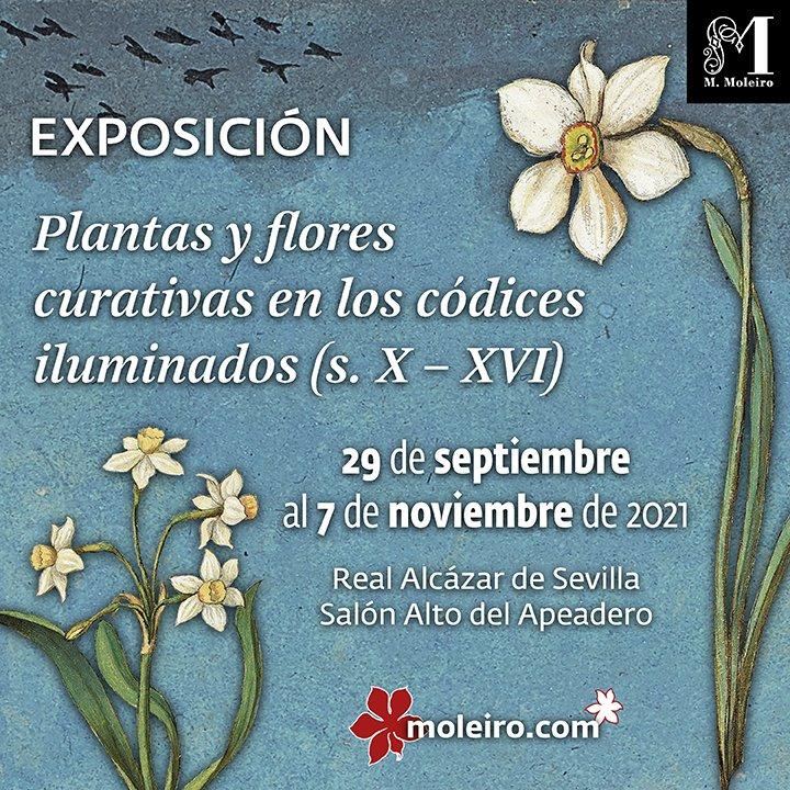 """En este momento estás viendo La exposición """"Plantas y flores curativas en los códices iluminados (s. X-XVI)"""", en el Alcázar hasta el 7 de noviembre"""